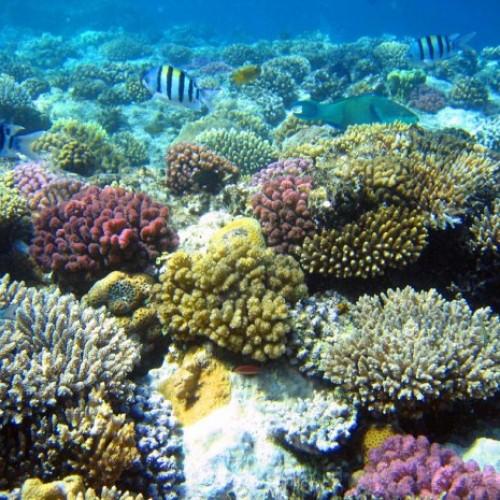 Tour du lịch khám phá biển ngọc Nha Trang